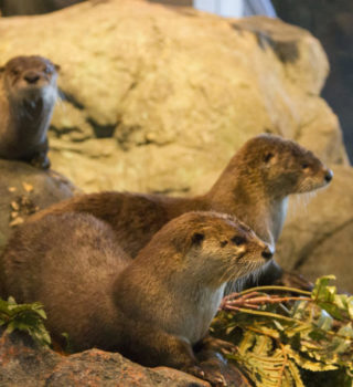 Otter Gallery - Photo Credit Courtney Lauchaire