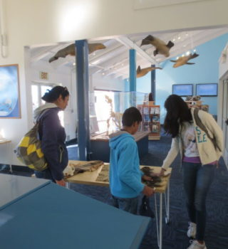 Sea Lion Center - interior