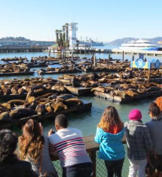 Sea Lion Center - sea lion viewing deck