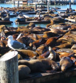 Sea Lion Center - sea lions